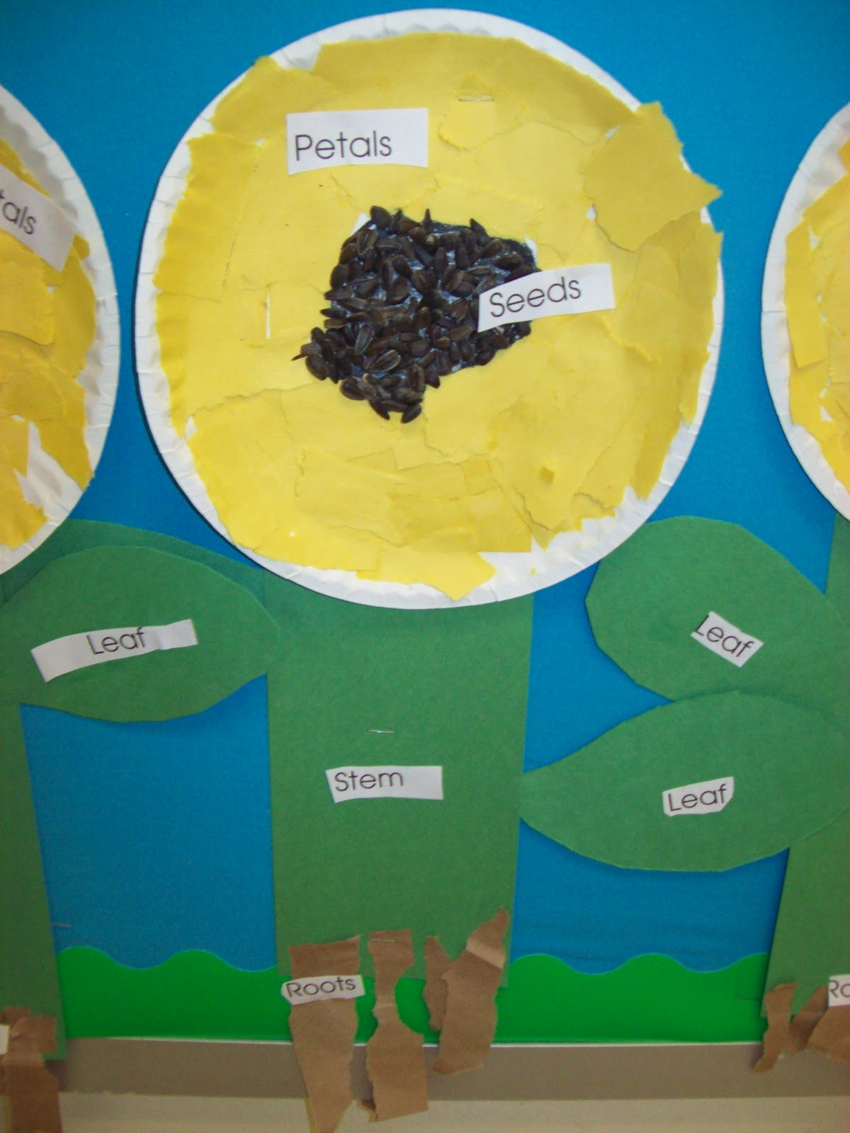Chalk Talk A Kindergarten Blog Growing Things And Parts