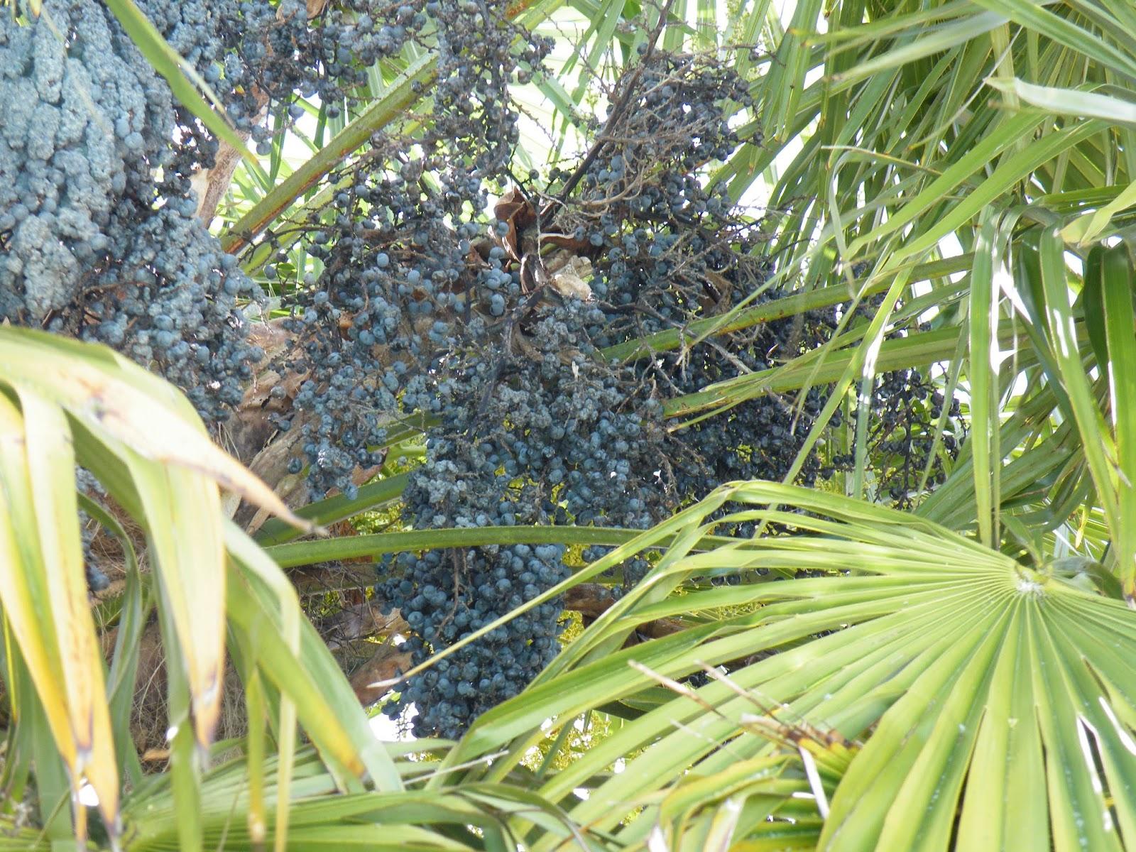 Du four au jardin et mes dix doigts palmiers again - Quand tailler un palmier ...