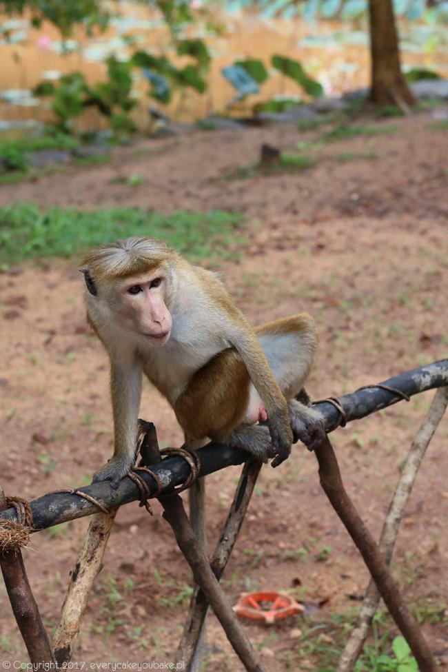 Sri Lanka - olśniewająca wyspa, relacja z podróży na Sri Lankę