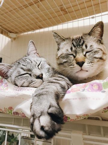 仲良く並んだふたつの寝顔