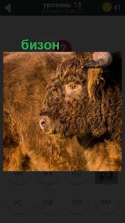 стоит бизон коричневого цвета на 15 уровне в игре 470 слов