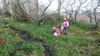 deti zbierajúce cesnak medvedí v port ellen