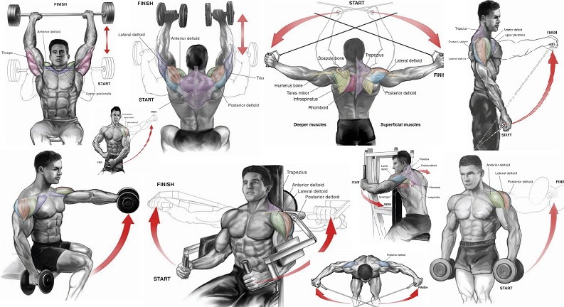 Shoulder Workouts for Mass