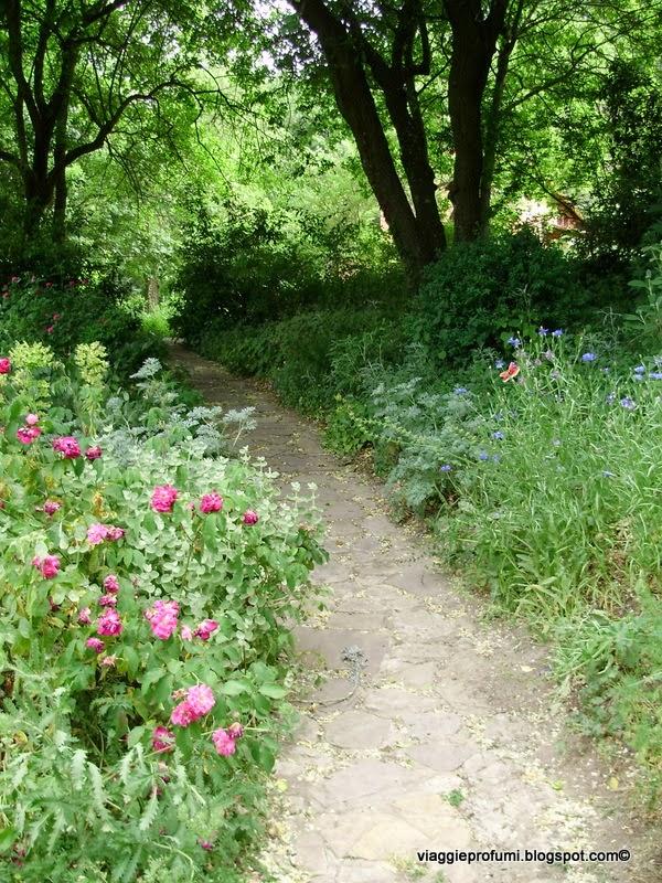 """Il sentiero per il """"bosco giardino"""" al Casoncello"""