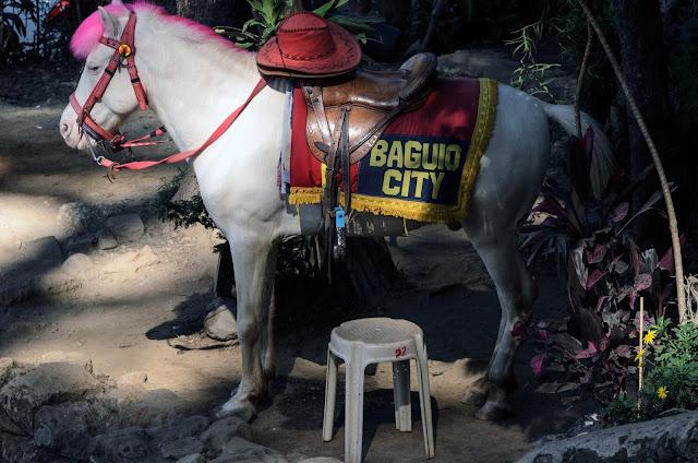 All prepped equine