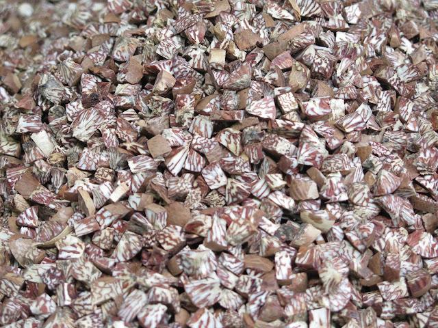 Semilla de nuez de areca