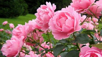 Bunga Termahal Di Dunia Dengan Harga Bombastis