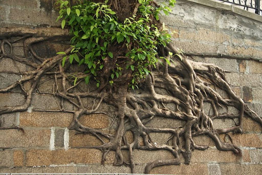 10 rboles que le han ganado la batalla al concreto for Arbol con raices y frutos
