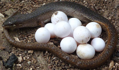 Hukum Telur Hewan yang Diharamkan