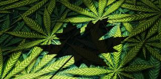 Canada's Cannabis Supply Chain Management