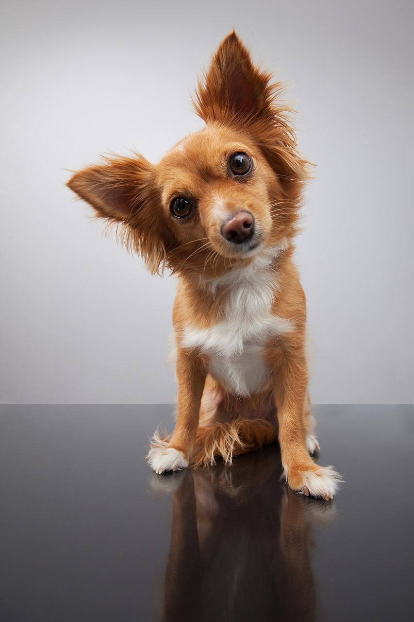Mężczyzna i pies, czyli 15 zabawnych cytatów na początek prezentacji biznesowej