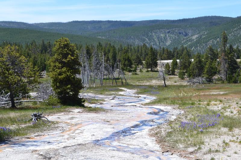 old faithful, Yellowstone, Wyoming, usa, parc