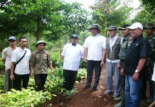 Kepala BPDASHL Cimanuk Citanduy Tinjau  Lokasi Persemaian RHL Bibit Tanaman Endemic di Sumedang