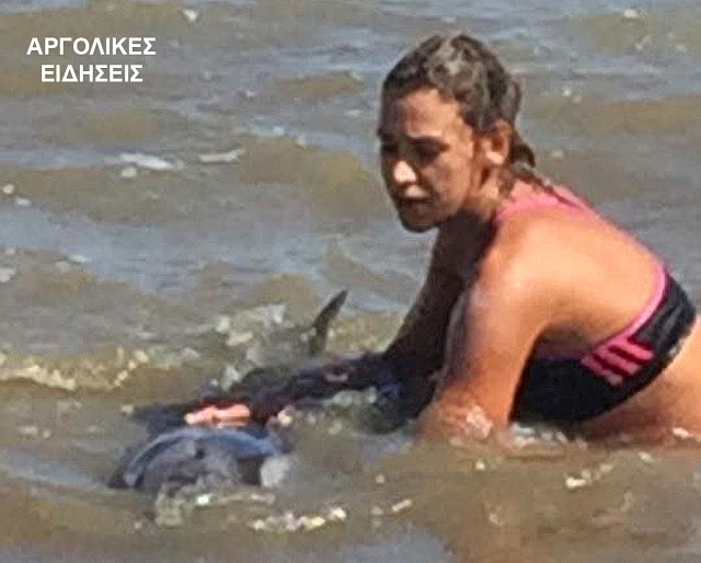 Διάσωση τραυματισμένου δελφινιού στην παραλία Τημενίου στην Αργολίδα (βίντεο)