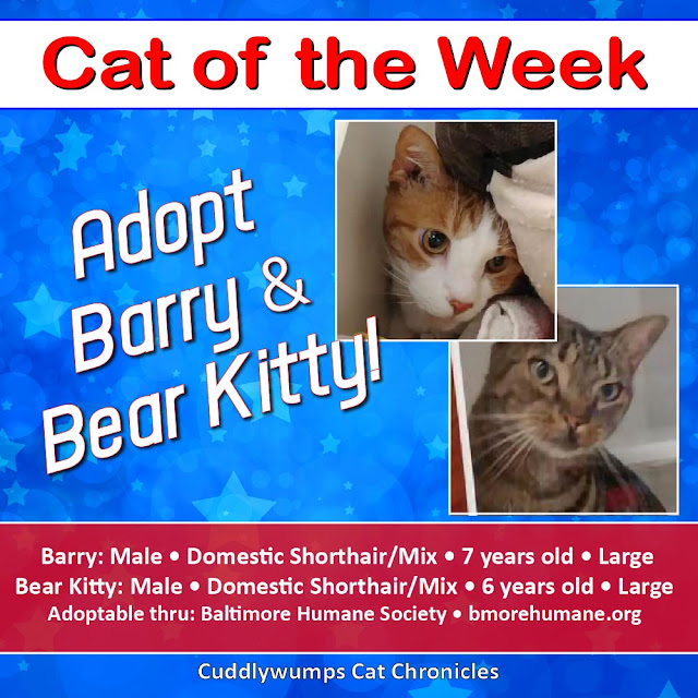 Adopt Barry & Bear Kitty!