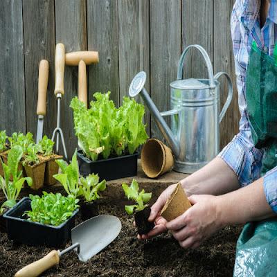 Como-montar-e-cuidar-de-uma-horta-em-casa