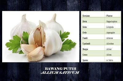 manfaat dan khasiat bawang putih (allium sativum)