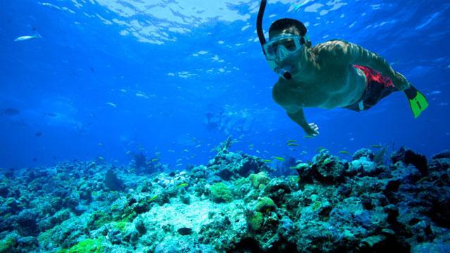 Snorkling dan Berenang