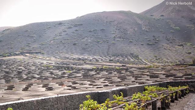 Wein auf Lanzarote inmitten der Vulkanlandschaft