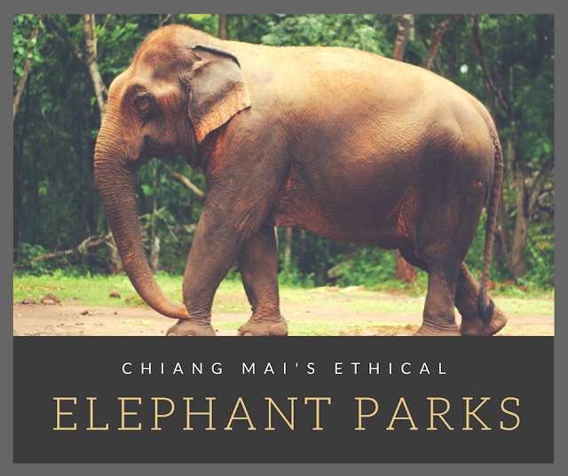 best ethical elephant park in chiang mai