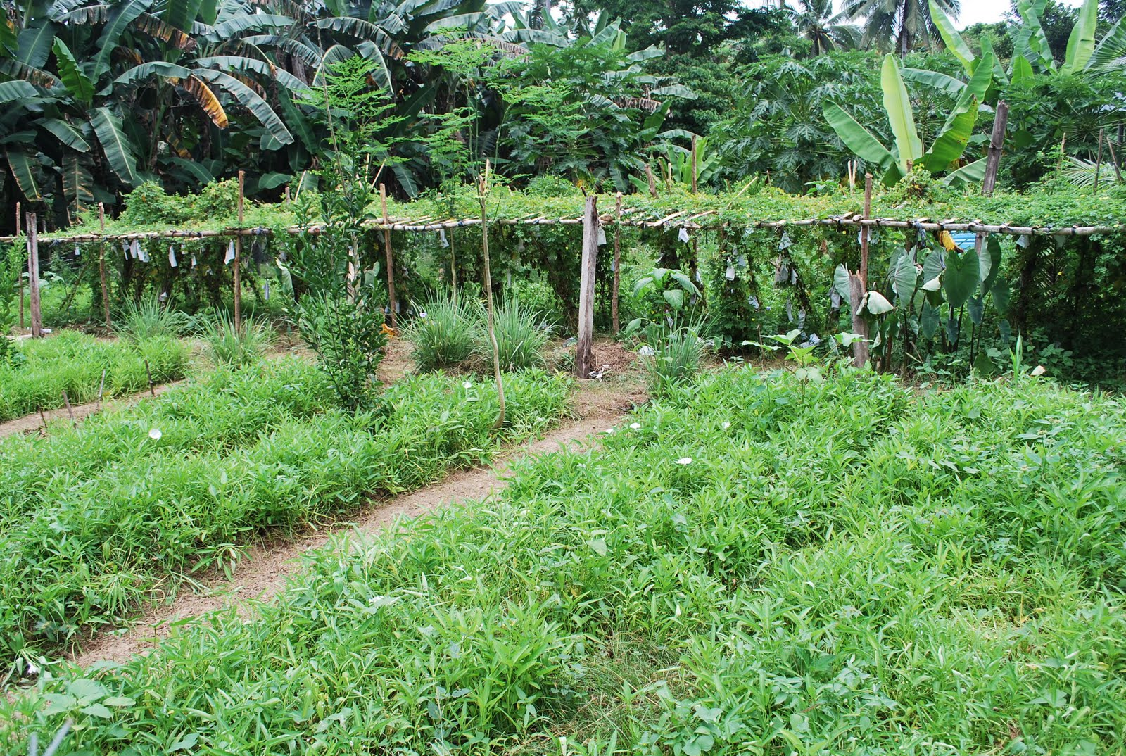 Water Agroforestry Nutrition And Development Wand