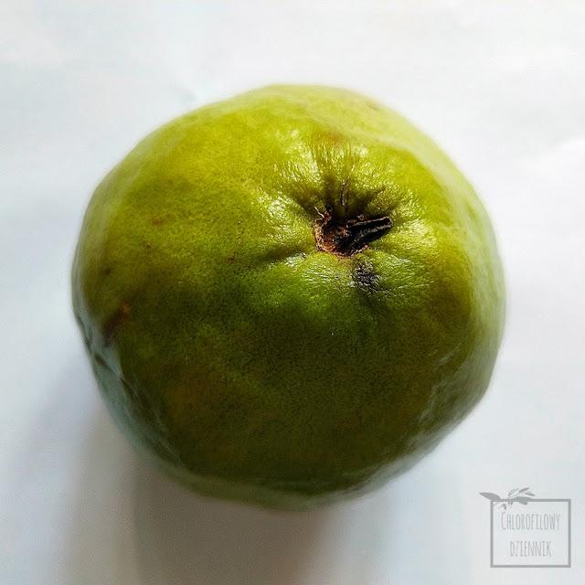 Gujawa (Psidium guajava) gruszla właściwa - różowy owoc, łatwa w uprawie roślina tropikalna z nasion, rosliny tropikalne w domu dla początkujących. Owoc gujawy - smak, wygląd, rozmiary, kolor, nasiona