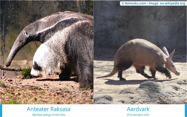 Perbedaan anteater raksasa dan aardvark