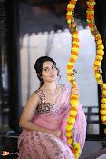 Raashi Khanna Pongal Photoshoot-thumbnail-2