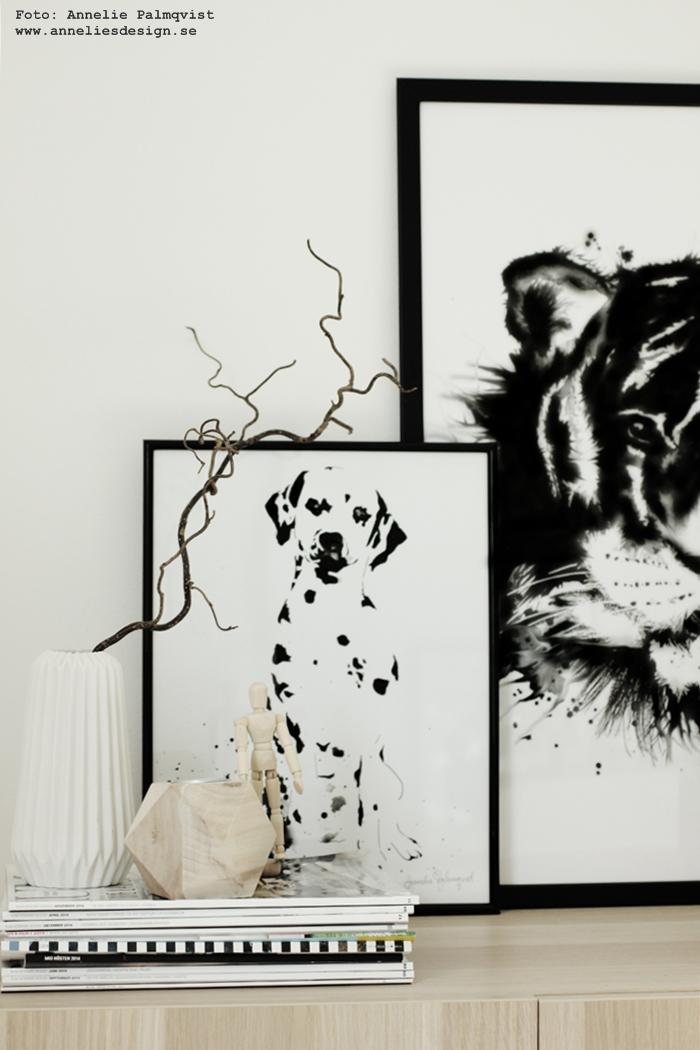tavla, tavlor, svartvit, svartvita, svart och vitt, annelies design, webbutik, webbutiker, webshop, nettbutikk, nettbutikker, plakat, plakater, tiger, tigrar, dalmatin, dalmatinerna, dalmatiner, hund, hundar, djur, svartvitt, på väggen, konsttryck poster, posters, print, prints,