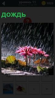 С неба падает сильный дождь и поливает цветы и асфальт. Пожелтевшие листья пляшут по земле