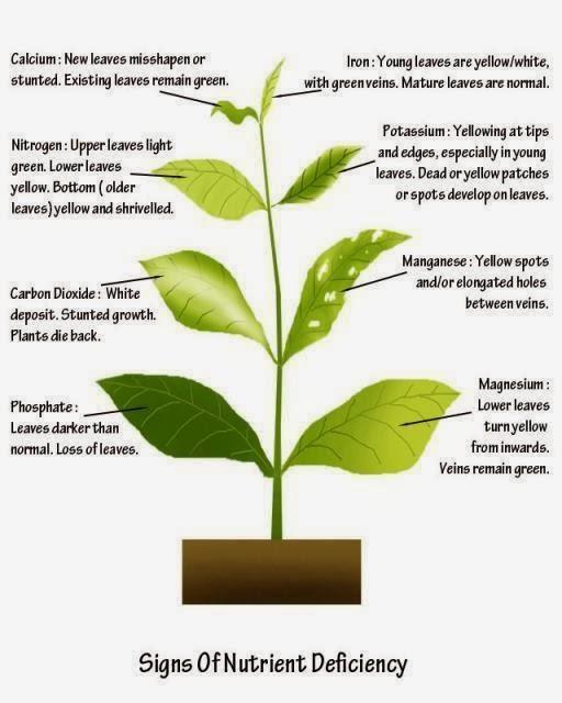 Balkan Ecology Project Plant Elements Nutrients