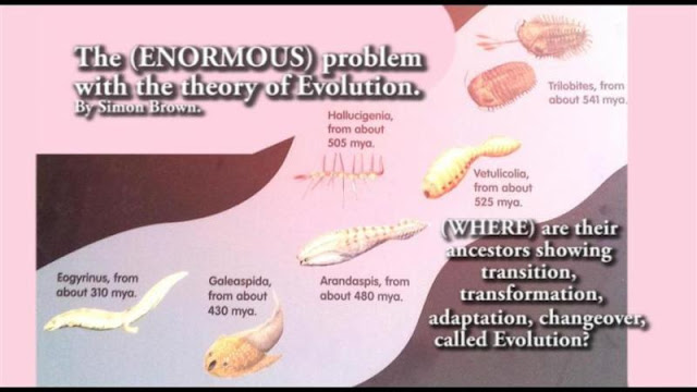If the theory of evolution was correct, we could do the same action and concept as numbers, count and start them from 1 to 100. Just as 100 numbers. In every number as it counts up we would see a minor change. Until we see every living creature has transformed into every living arthropod, insect, and animal living today or discovered in the fossil record.