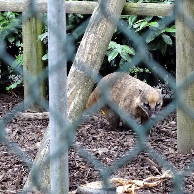 zoo's cuteness
