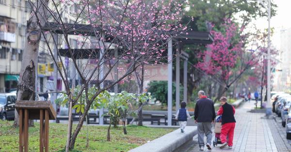 台中北區|台中市太原賞櫻廊道|700公尺綠園道|散步賞花|遛狗運動|休閒好去處