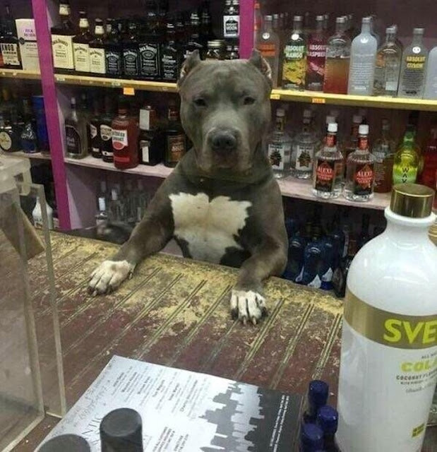 O novo atendente do bar