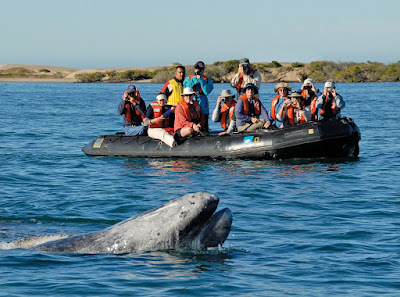 Lindblad Expeditions Whale Watching Voyage