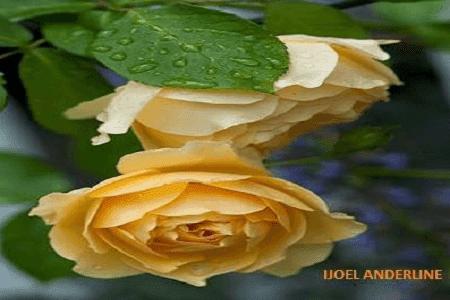 Kumpulan Puisi Taman Bunga Indah Dan Mempesona