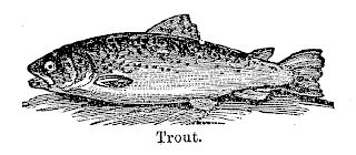 fish trout fishing image illustration transfer digital clipart