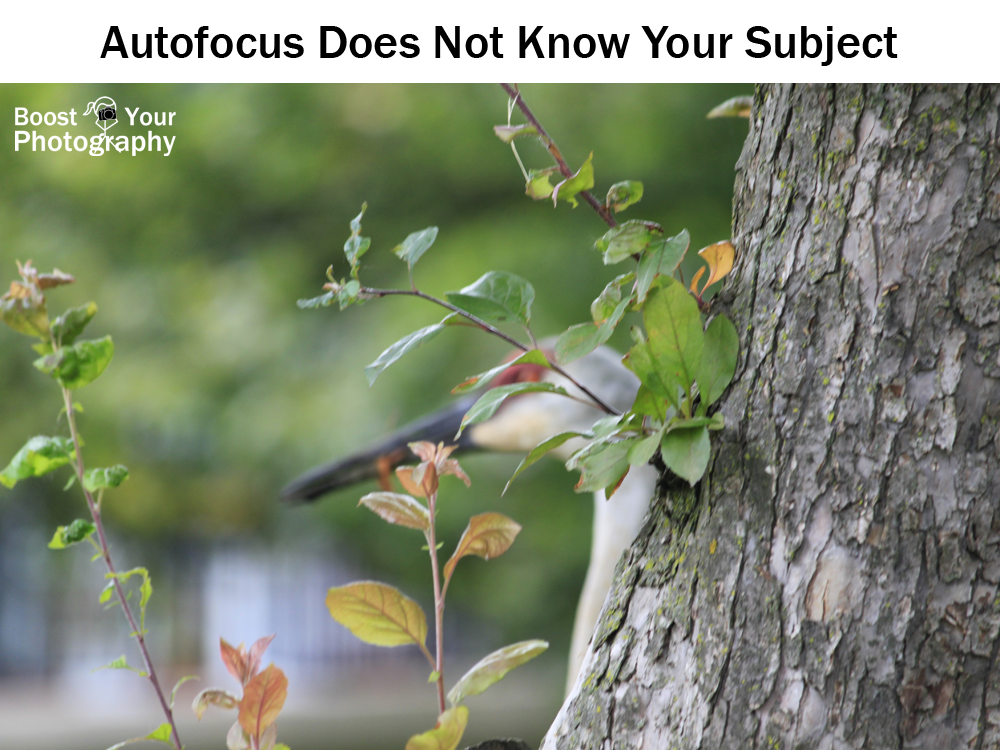 Autofocus does not know your subject | Boost Your Photography