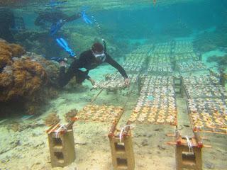 ogród koralowy