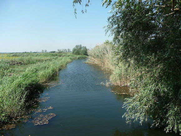 Река Волчья. Ландшафтный заказник «Бакаи». Дренажный канал