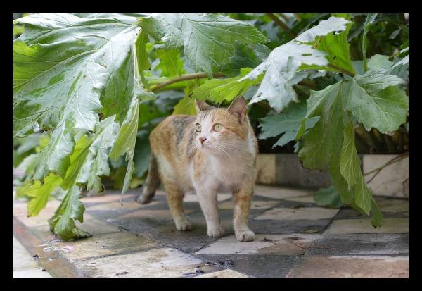 palace cats