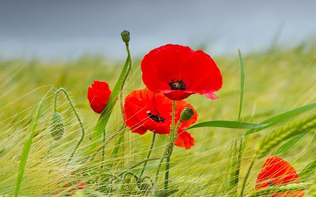 Flores Rojas Hermosas Fotos de Flores - Imágenes de Flores en HD