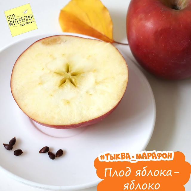 Плоды растений для детей