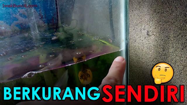 HERAN Kenapa Air Di Aquarium Ikan Hias Bisa Berkurang Sendiri Ya