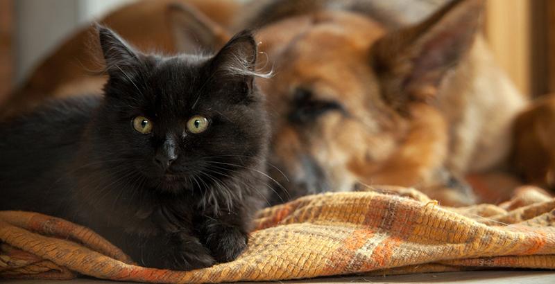 dogteur les piq res d 39 ao tats chez le chien ou le chat. Black Bedroom Furniture Sets. Home Design Ideas