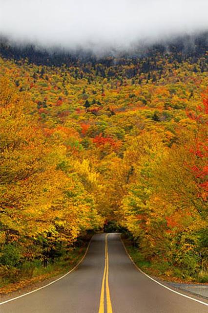 http://2.bp.blogspot.com/-8Qw2cQmi7y0/ULnij8e1FcI/AAAAAAAA6ao/Eb_I4gxdIaQ/s1600/Top-10-Tree-Tunnel-003.jpg