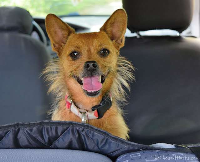 perfect car liner for dogs