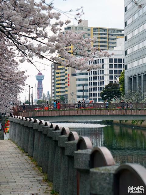 天神中央公園の桜と博多ポートタワー、福岡