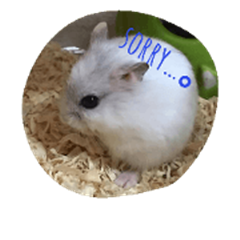 hamster Tiny